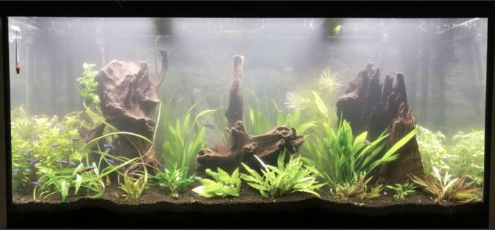 Aquarium juwel rio 300 - Page 3 Captur14
