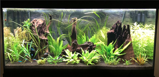 Aquarium juwel rio 300 - Page 3 Captur16