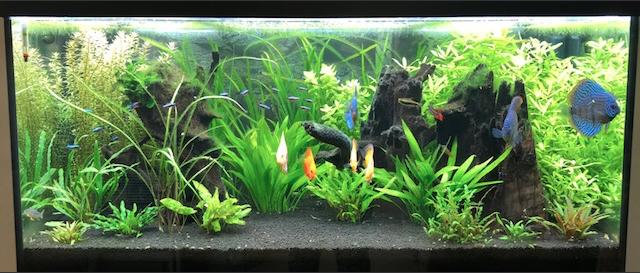 Aquarium juwel rio 300 - Page 3 Captur18