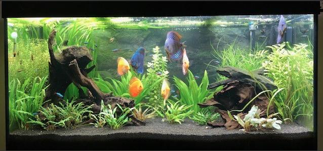 Aquarium juwel rio 300 - Page 3 Captur39