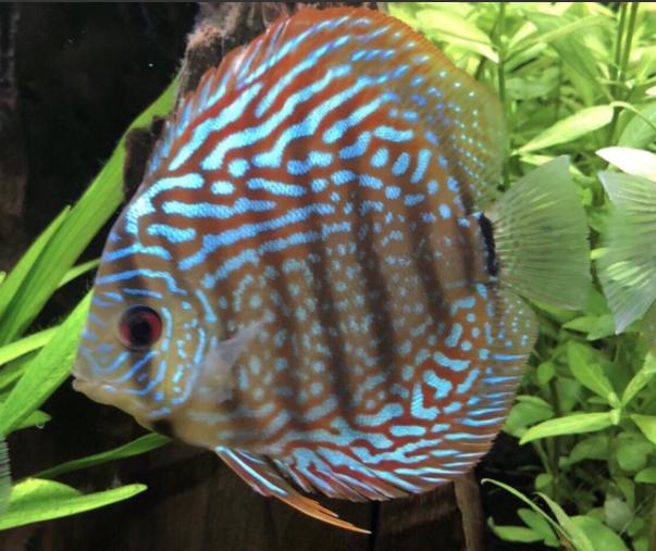 Aquarium juwel rio 300 - Page 3 Captur48