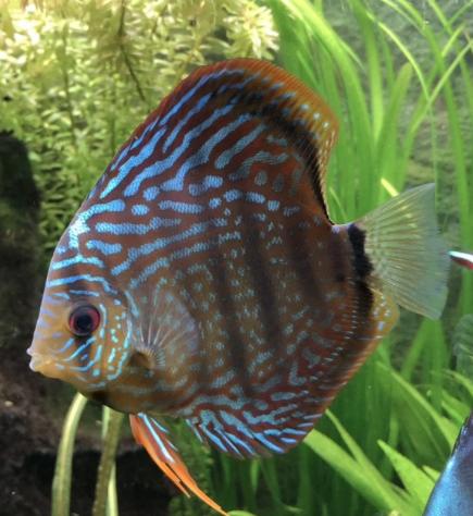 Aquarium juwel rio 300 - Page 3 Captur49