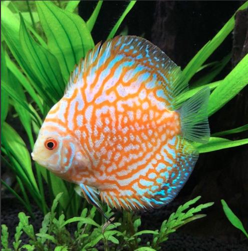 Aquarium juwel rio 300 - Page 3 Captur53