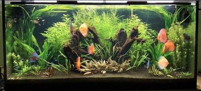 Aquarium juwel rio 300 - Page 3 Captur60