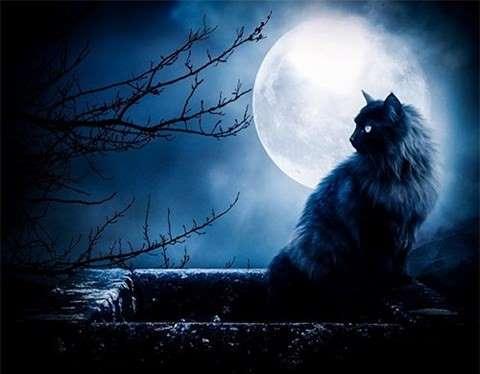Mèo đen huyền bí vì sao bị gán với điềm xui xẻo? Aayxqn10