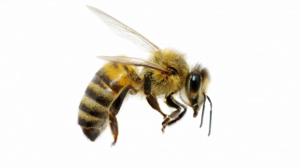 Đố vui khoa học Bee-e110