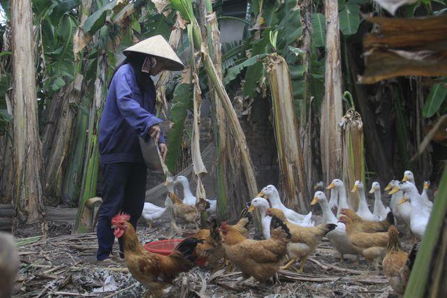 Nữ sinh nhà nghèo nuôi gà, bán cà phê gom góp tiền đi học Co-be-13