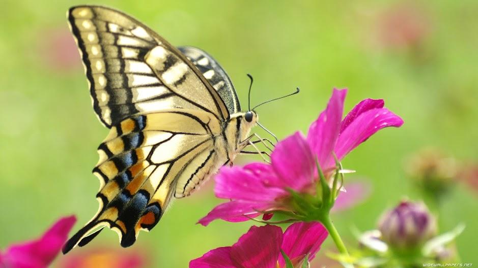 Con ngài và con bướm Con-bu10