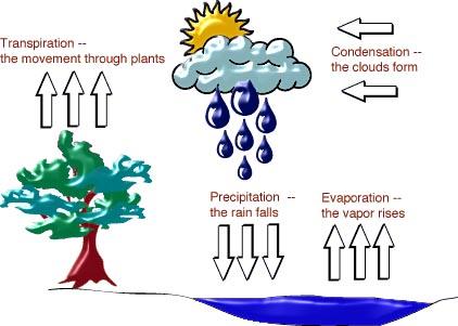 Những hiểu biết sai lệch về nước Cycle210