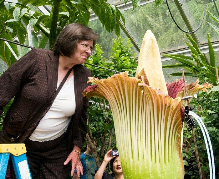 10 loài hoa hiếm và đẹp nhất thế giới Hoa-co10