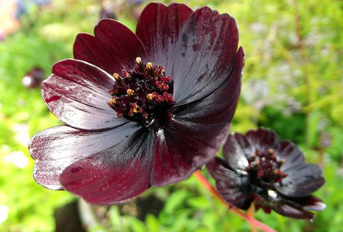 10 loài hoa hiếm và đẹp nhất thế giới Hoa-cu10