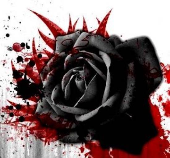 Sự tích hoa Hồng đen Hoa-ho18