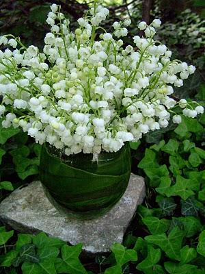 Sự tích hoa linh lan Hoa-la13