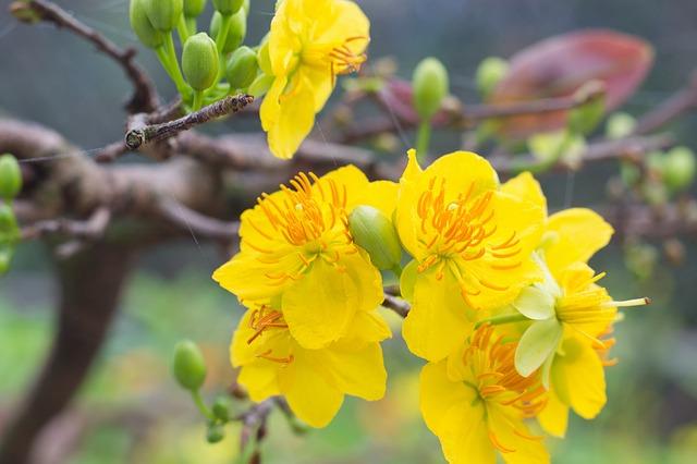 10 loài hoa được mệnh danh là đẹp nhất thế giới - Page 2 Hoa-ma10