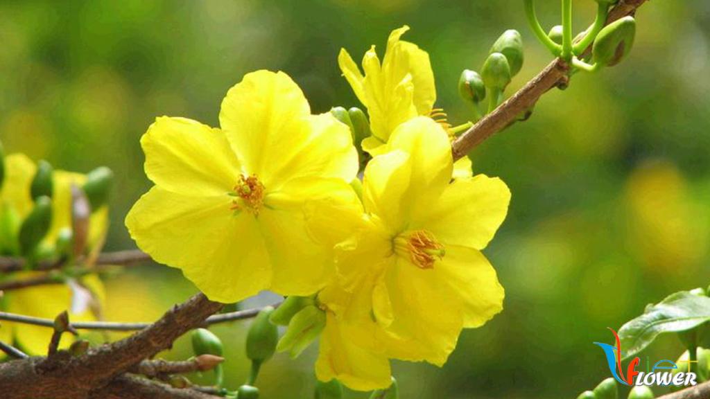 10 loài hoa được mệnh danh là đẹp nhất thế giới - Page 2 Hoa-ma11