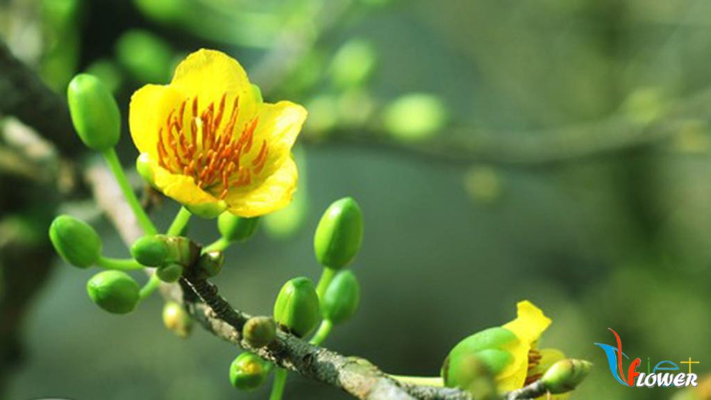 10 loài hoa được mệnh danh là đẹp nhất thế giới - Page 2 Hoa-ma13