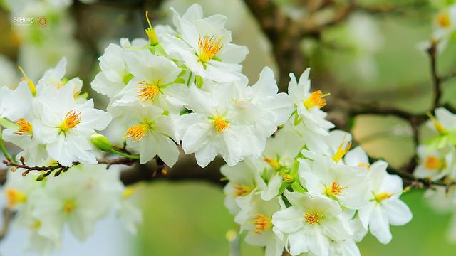 10 loài hoa được mệnh danh là đẹp nhất thế giới - Page 2 Hoa-ma15