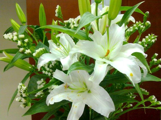 Sự tích hoa Lily Hoa_li14