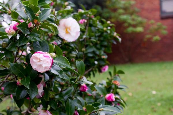10 loài hoa được mệnh danh là đẹp nhất thế giới - Page 2 Hoa_tr10
