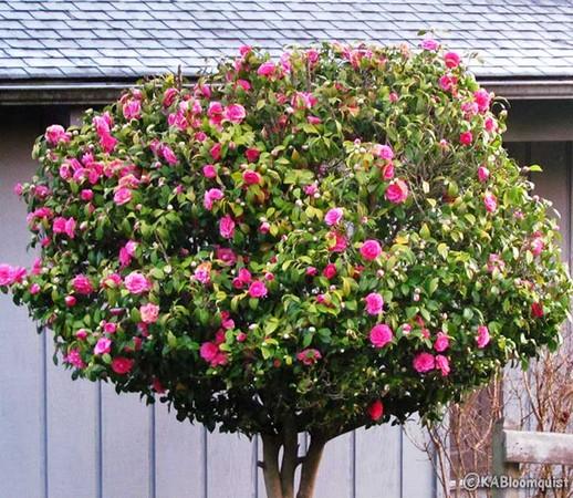 10 loài hoa được mệnh danh là đẹp nhất thế giới Hoa_tr12