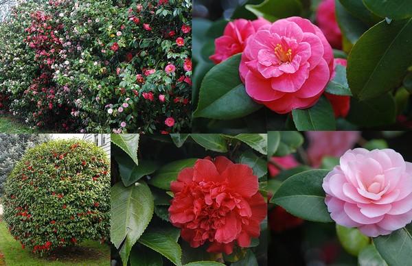 10 loài hoa được mệnh danh là đẹp nhất thế giới Hoa_tr13
