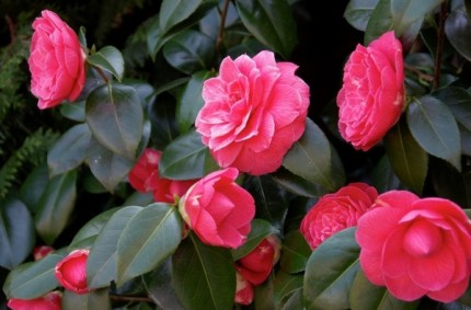 10 loài hoa được mệnh danh là đẹp nhất thế giới Hoa_tr16