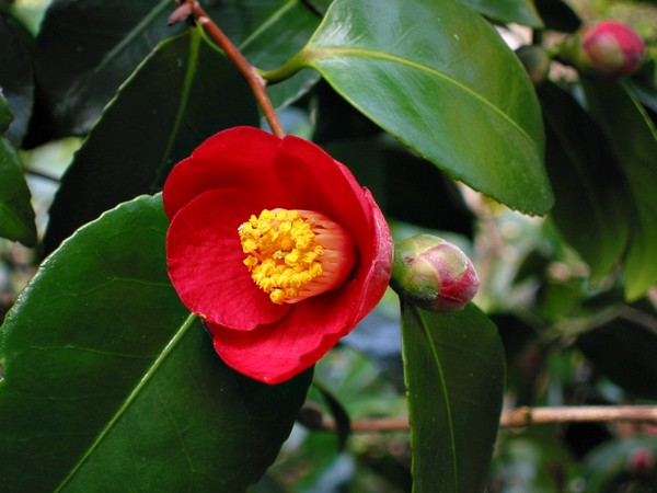 10 loài hoa được mệnh danh là đẹp nhất thế giới Hoa_tr17