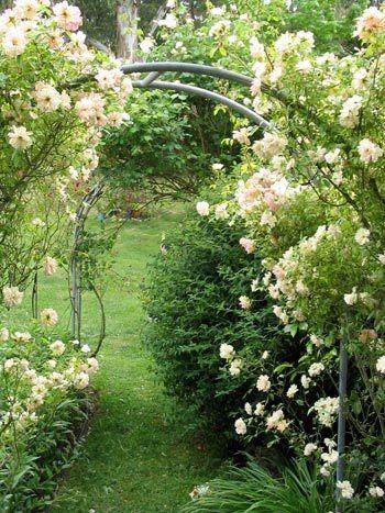 Sự tích hoa hồng bạch Hoahon15