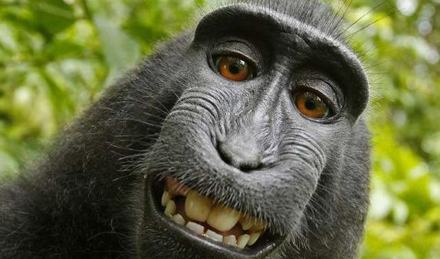 Tại sao khỉ thích ăn chuối? Khi0110