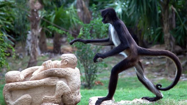 Tại sao khỉ thích ăn chuối? Khi0510