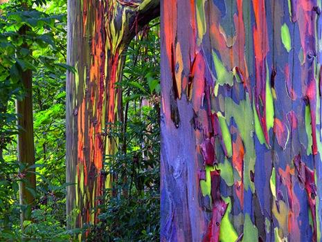 Những điểm đến tràn ngập màu sắc Mau-2610