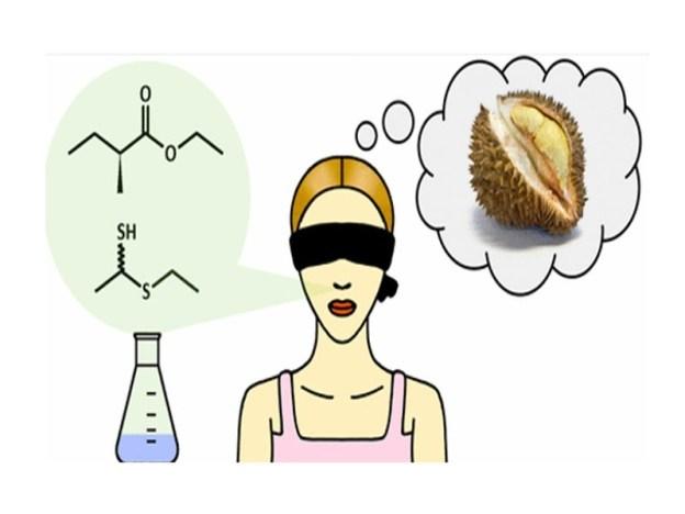 Đố bạn biết trái sầu riêng rụng vào lúc nào? Muisau10