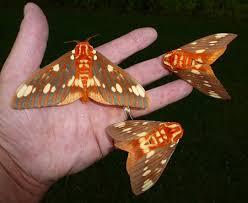 Con ngài và con bướm Nga0211