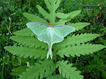 Con ngài và con bướm Ngai0311