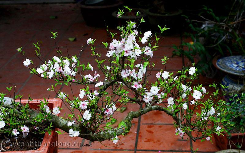 10 loài hoa được mệnh danh là đẹp nhất thế giới - Page 2 Nhat_c11
