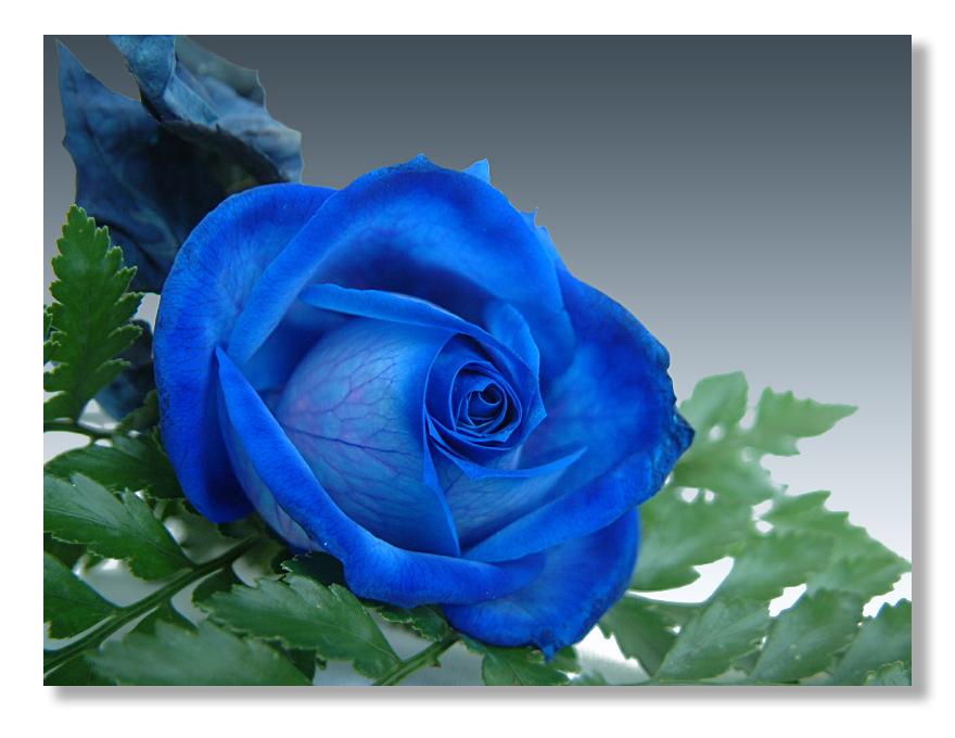 Truyền thuyết hoa hồng xanh Truyen10