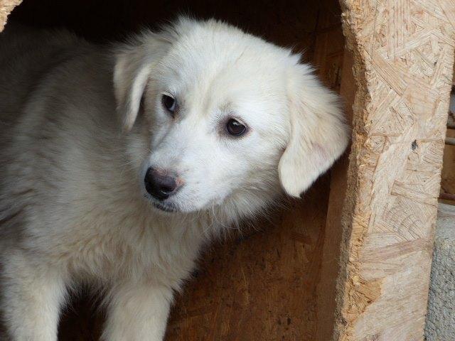 MARLIN, F-X Labrador, né ??? (TAMARA FOURRIERE) Prise en charge La Ferme des Rescapés 31956210