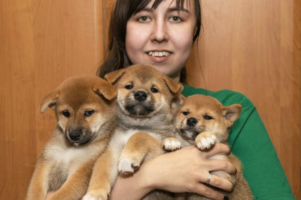 Рыжие щенки от пары AKAI HANA NOBUYUKI и LEGENDA ARDEN OHARA SHINDZHU рожд.20.09.20г Img-2088