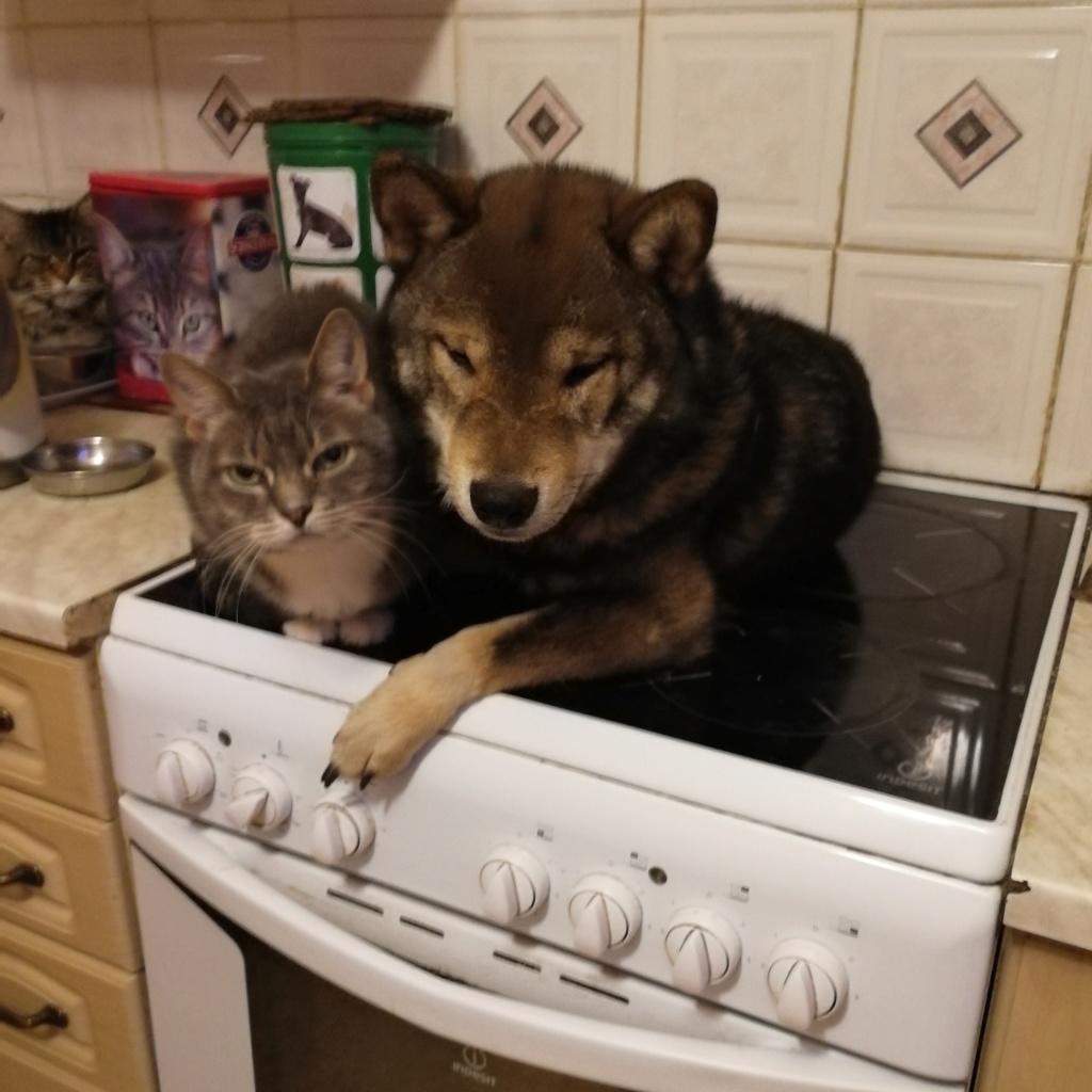 Хочу шибу, но дома кот… рисковано? - Страница 3 Img_2147