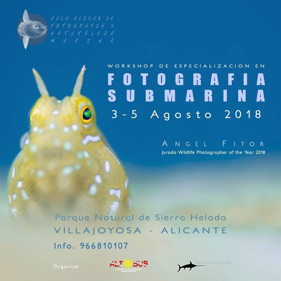 Agenda Lúdica y Cultural de Villajoyosa - Página 22 36748410