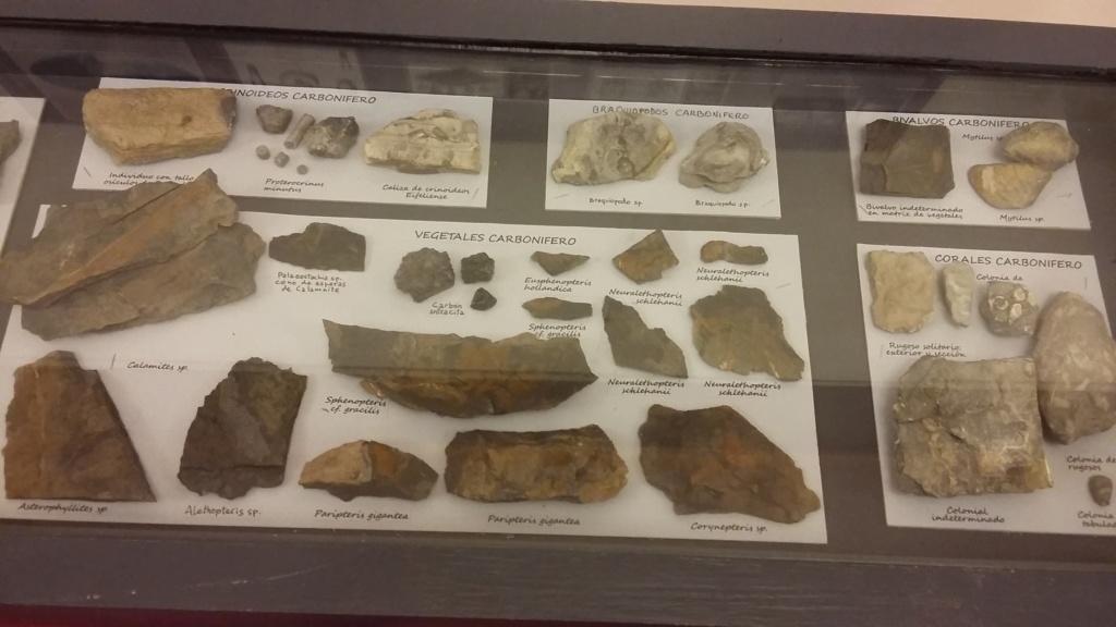 Exposición especies de la transversal pirenaica y algunas cosas más 20181017