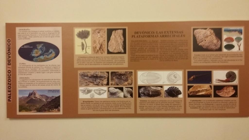 Exposición especies de la transversal pirenaica y algunas cosas más 20181027