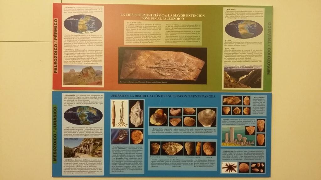 Exposición especies de la transversal pirenaica y algunas cosas más 20181028