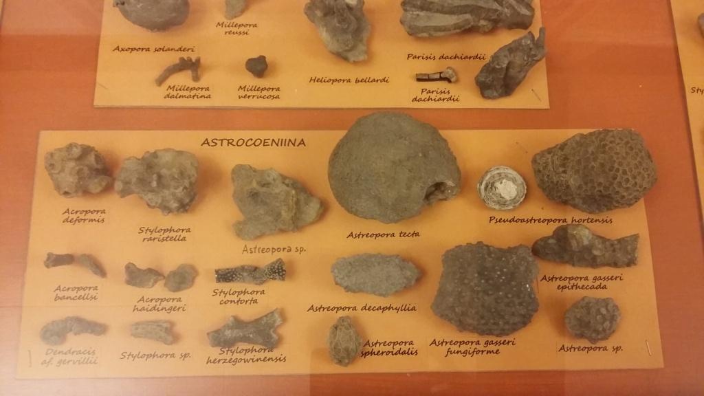 Exposición especies de la transversal pirenaica y algunas cosas más 20181030