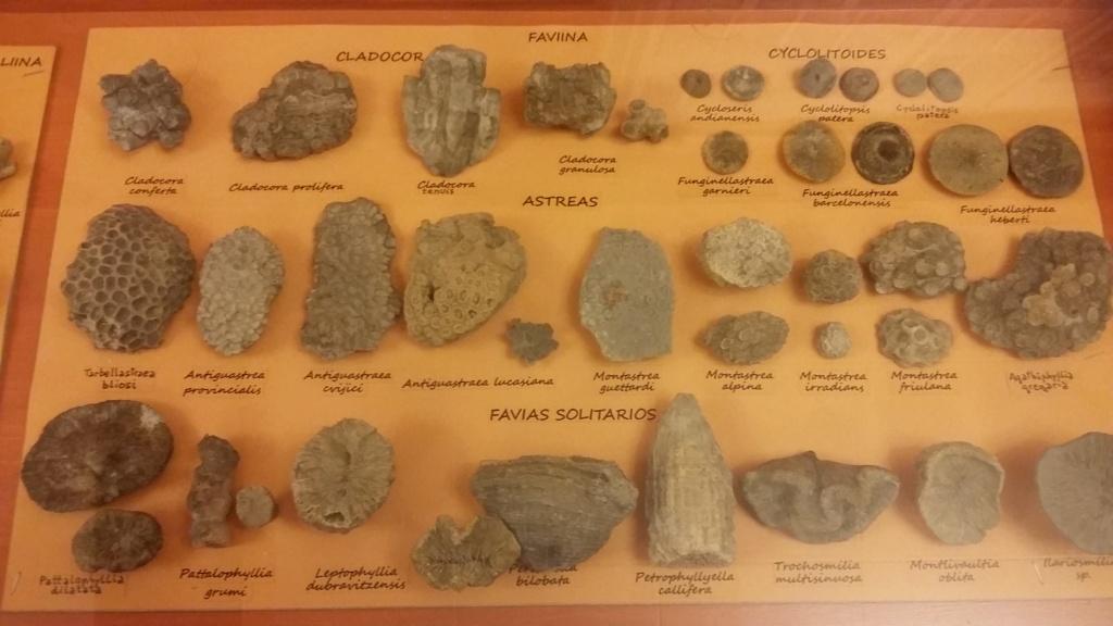 Exposición especies de la transversal pirenaica y algunas cosas más 20181037