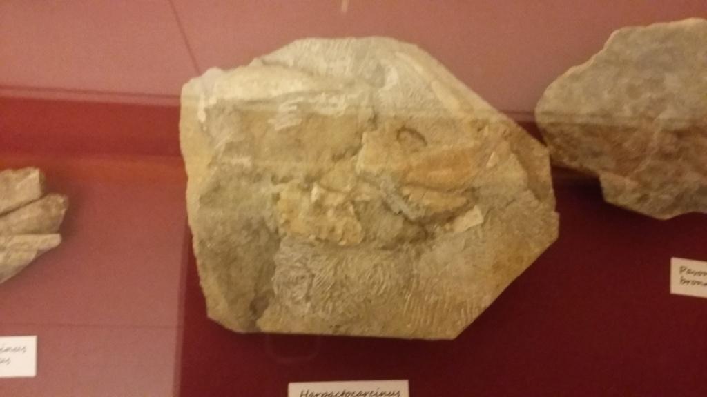 Exposición especies de la transversal pirenaica y algunas cosas más 20181048