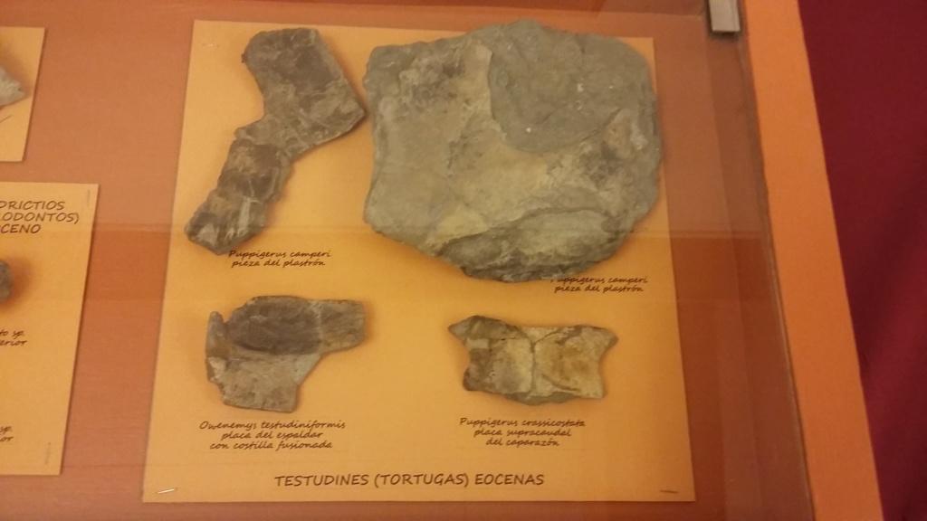 Exposición especies de la transversal pirenaica y algunas cosas más 20181053