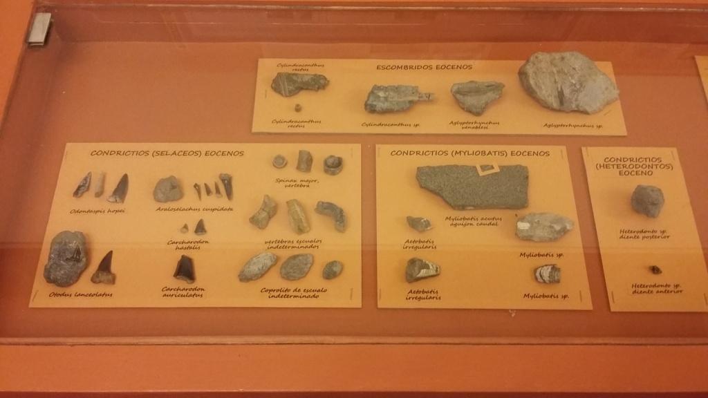 Exposición especies de la transversal pirenaica y algunas cosas más 20181055