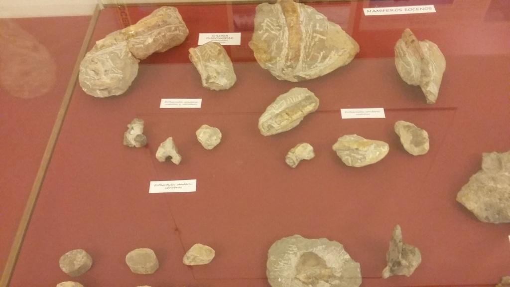 Exposición especies de la transversal pirenaica y algunas cosas más 20181057