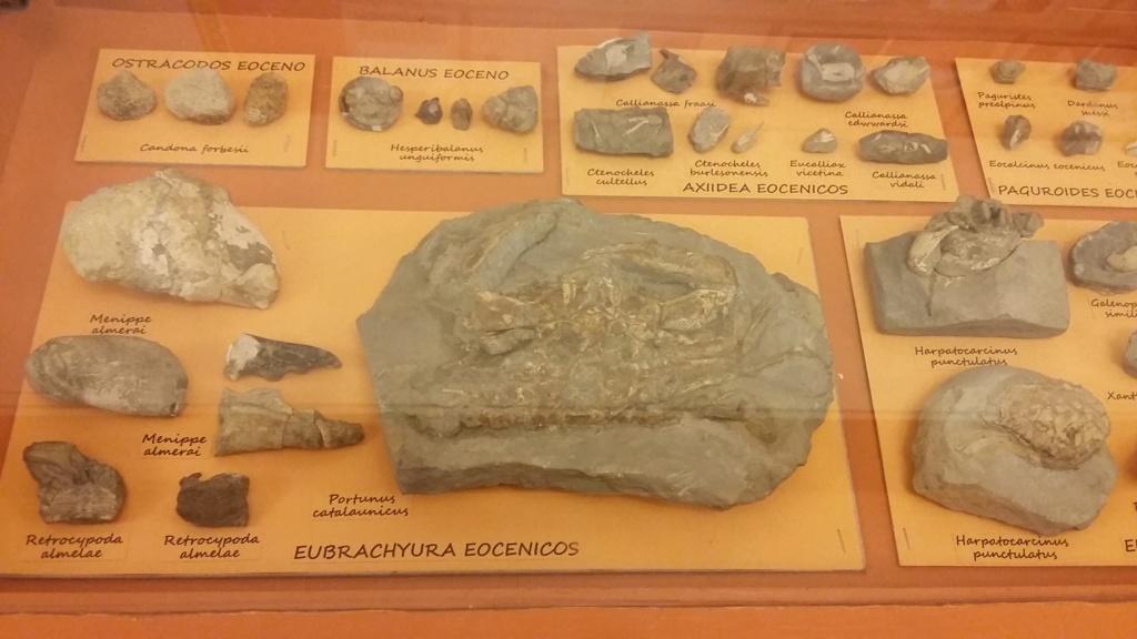 Exposición especies de la transversal pirenaica y algunas cosas más 20181058